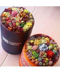 200pcs mix lithops sementes